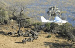 elephant_aerial