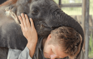 great_elephant_census
